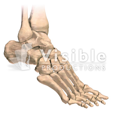 Medical Animation From Visual Health Solutions Skeletal System