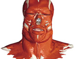 Muscular System: The Head & Neck, Anterior View