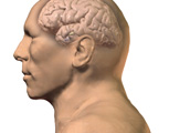 Endocrine System: The Hypothalamus & Pituitary, Lateral View