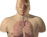 Respirartory System: Anterior View of the Head & Thorax