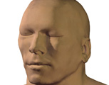 The Head & Neck: Male Head, 3/4 View