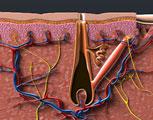 Telogen Hair Loss