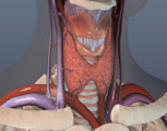 What are the symptoms of thyroid cancer?