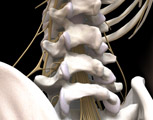 Lumbar injection anatomy
