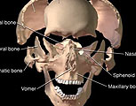 Exploded Skull with labels