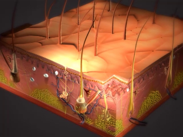 Skin Animation