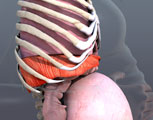 Compression of the Diaphragm