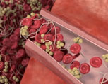 What are antiplatelet drugs?